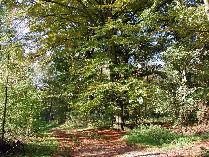 Forêt de feuillus mêlés
